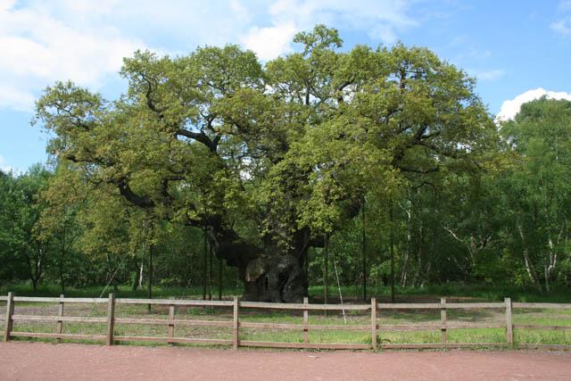 The Major Oak - geograph.org.uk - 1328654