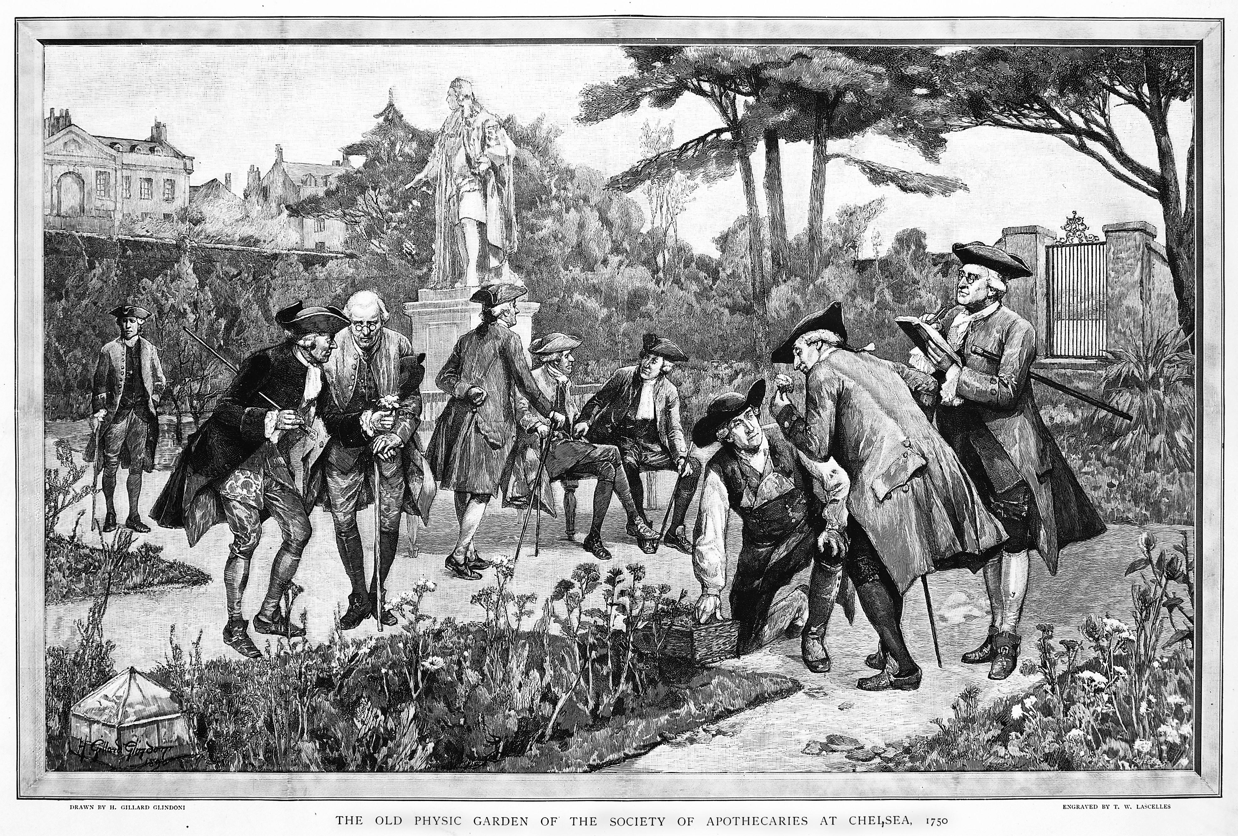 Physic garden wikipedia - File The Physic Garden Chelsea Men Botanizing In The Garden Ne Wellcome