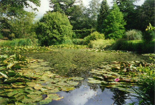The pond at Furzey Gardens - geograph.org.uk - 349389