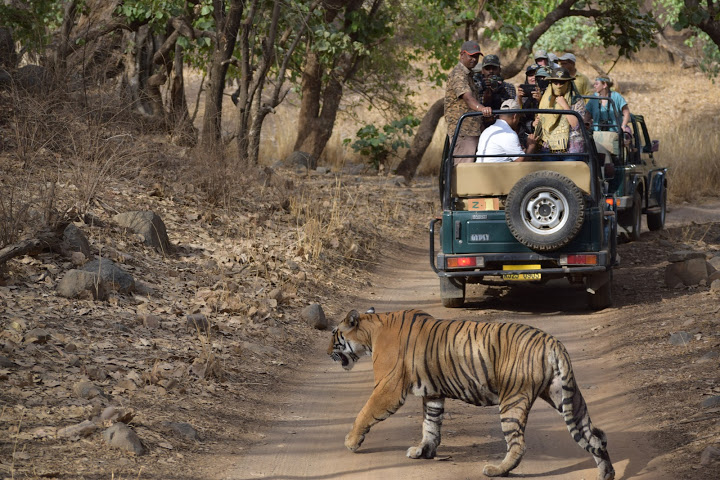 Ranthambore | List of National Park in India