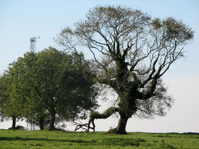 Toe-tapping tree - geograph.org.uk - 1005036