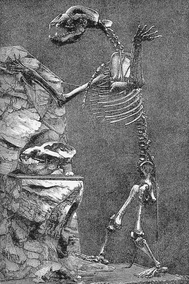 Depiction of Ursus spelaeus