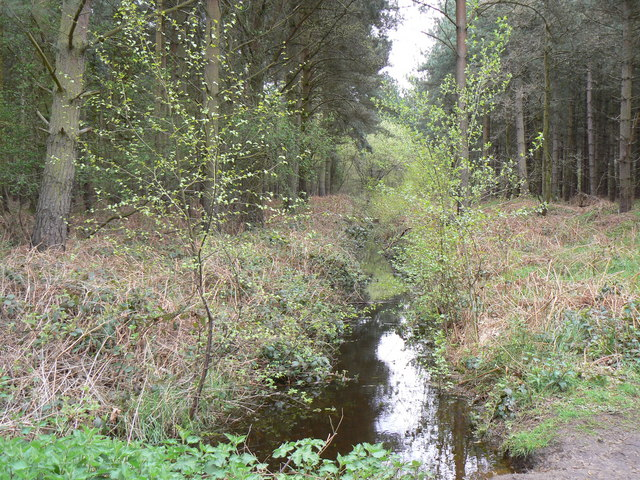 Woodland reflection - geograph.org.uk - 793595