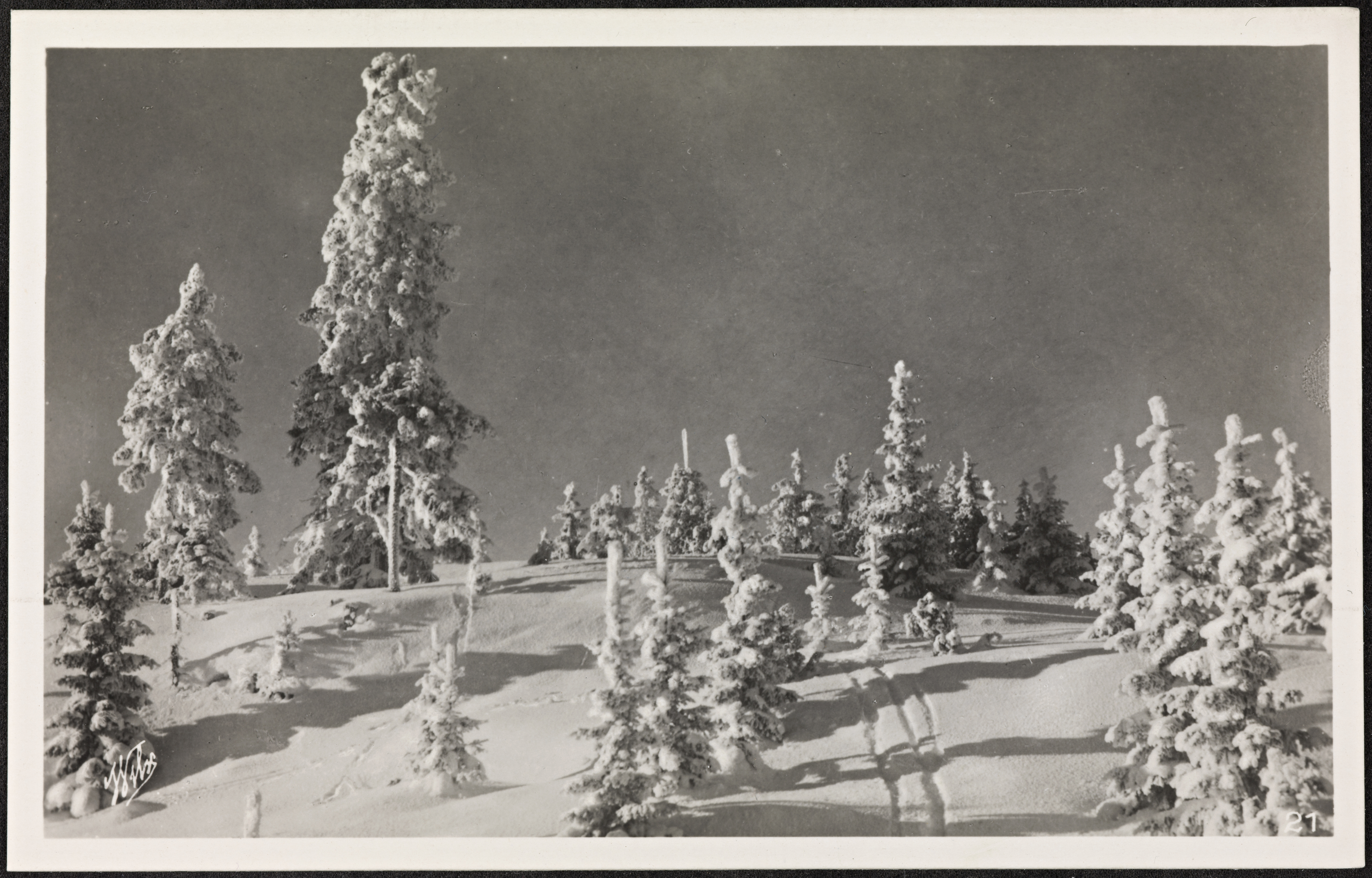 A black-and-white photograph of a snowy slope with snow-covered trees of different heights