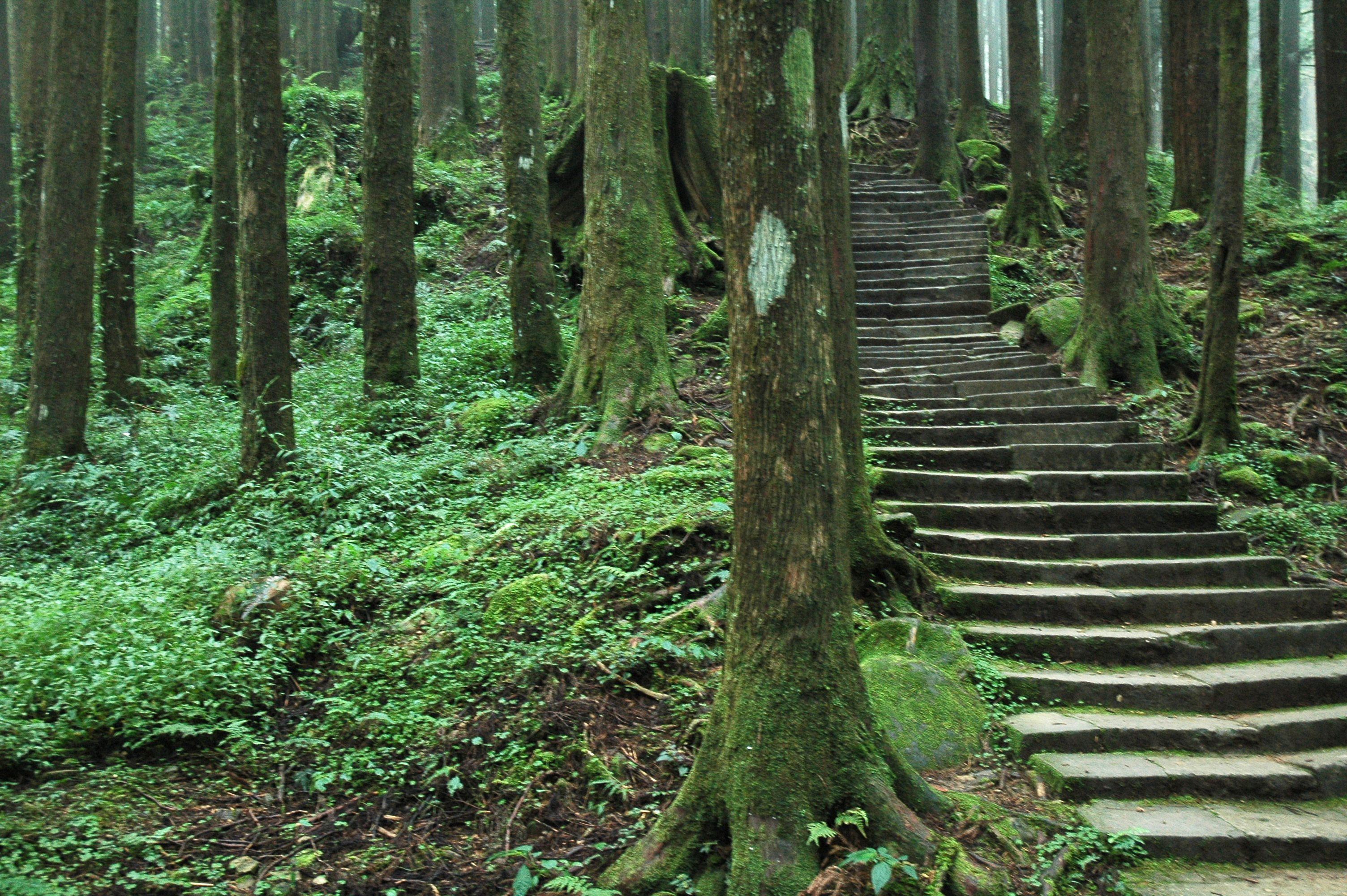 Alishan – Travel guide at Wikivoyage