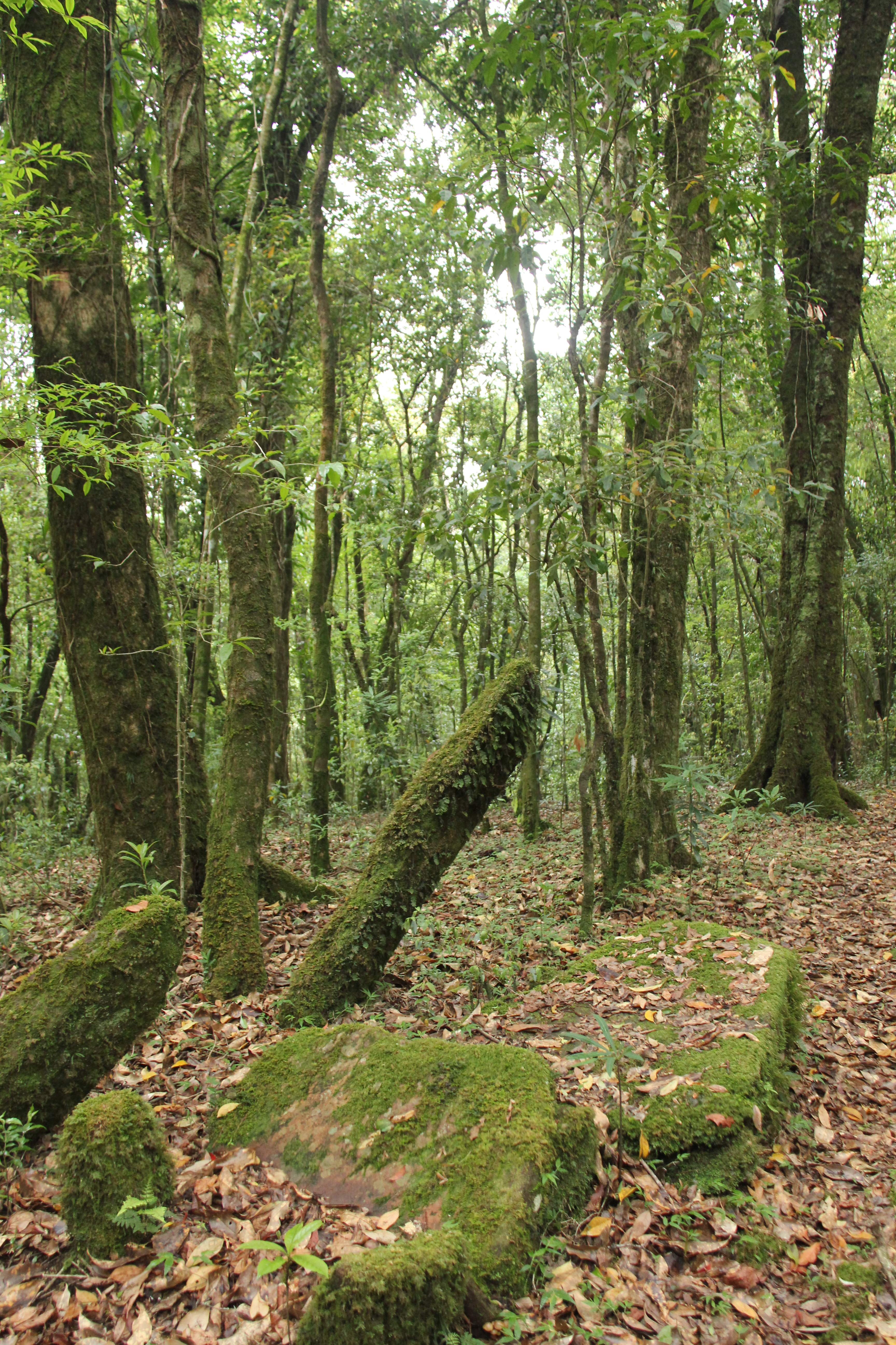 Sacred grove - Wikipedia