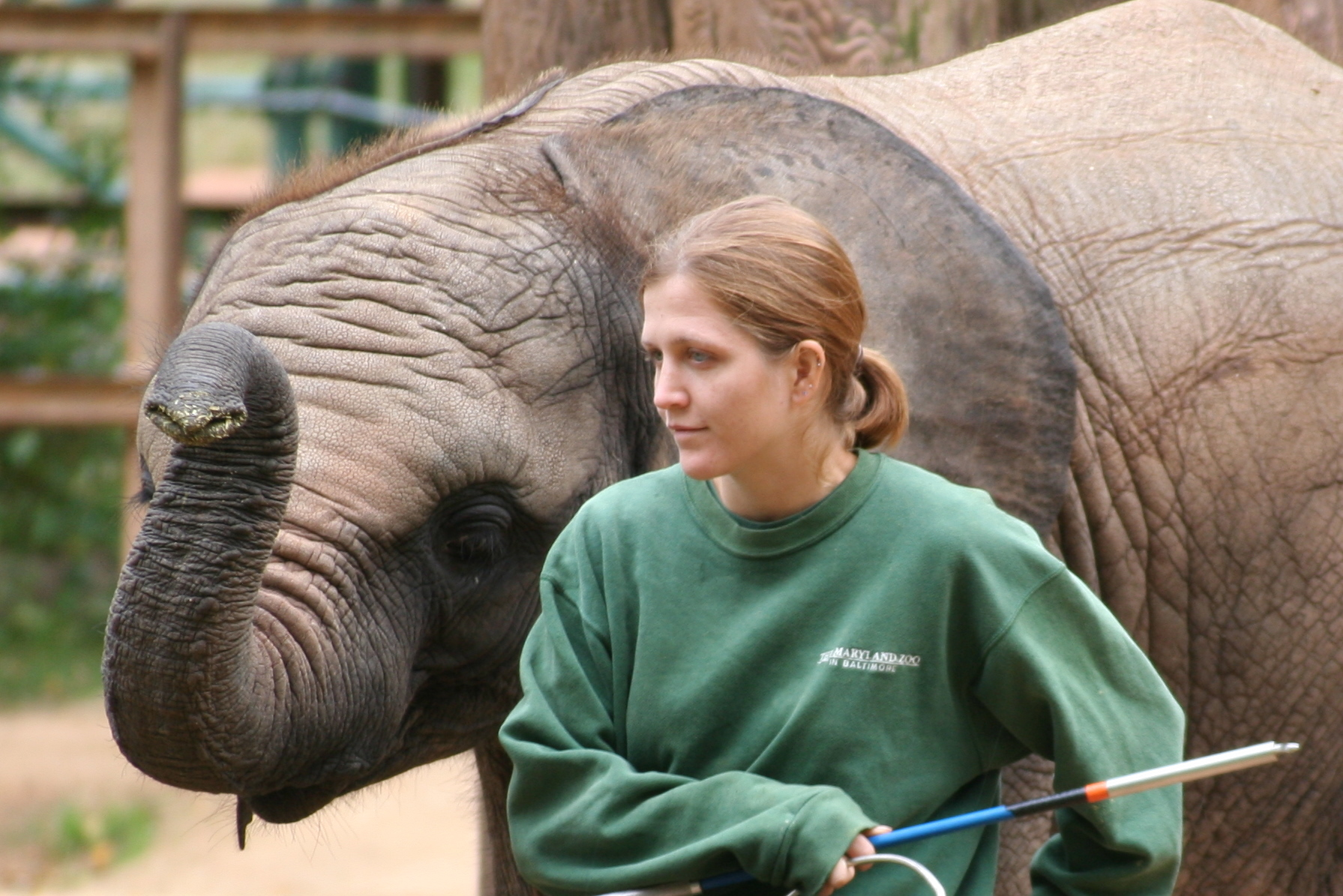 Elephant with keeper at Baltimore Zoo. Image via Wikipedia.