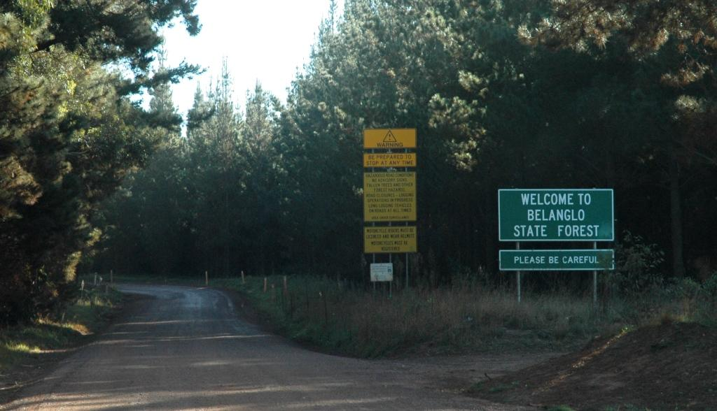 State Forest Wikipedia