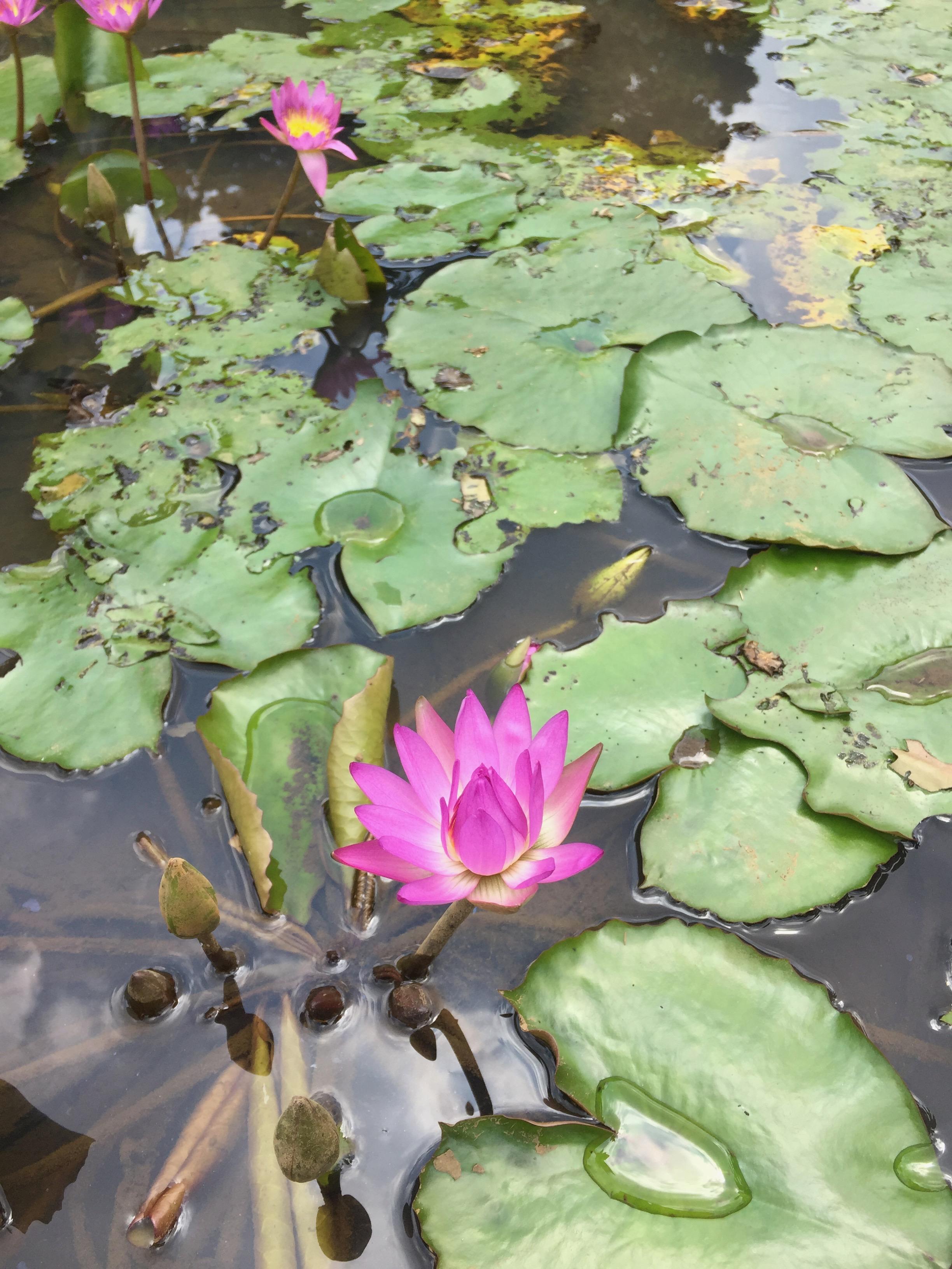 83 Gambar 2 Dimensi Bunga Teratai Terlihat Keren