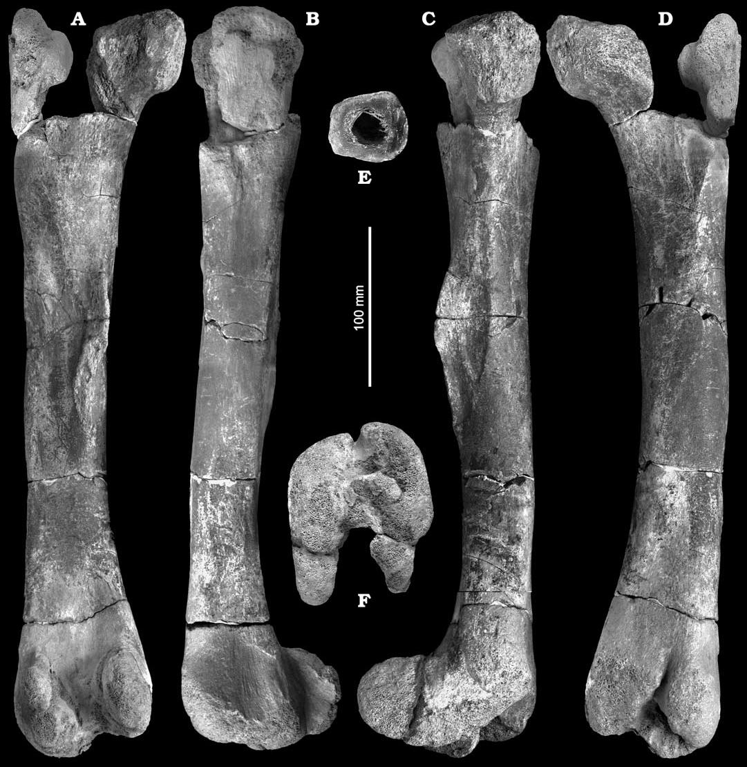 https://upload.wikimedia.org/wikipedia/commons/f/fb/Burianosaurus.jpg