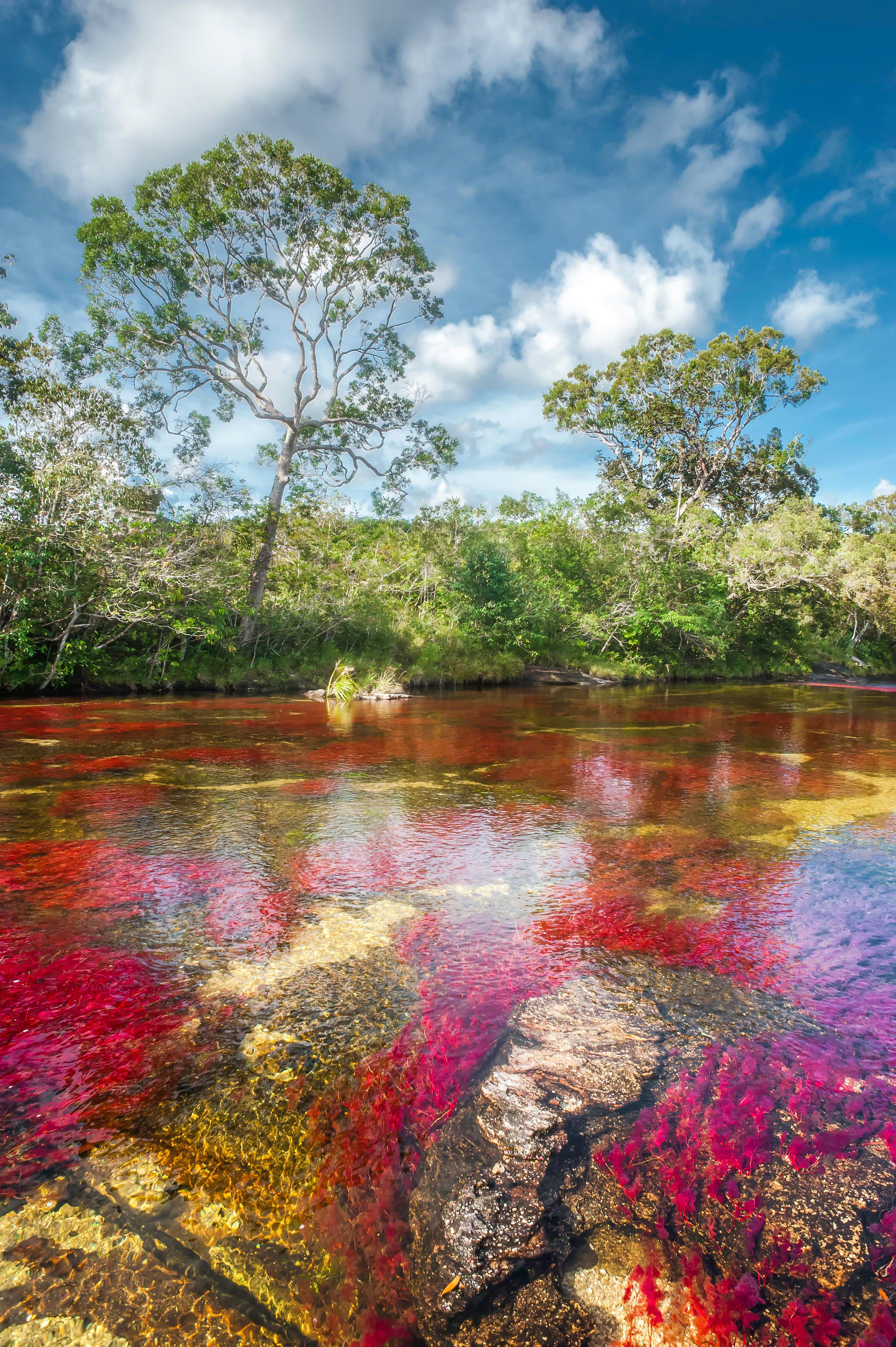 Río Caño Cristales, en Meta (Colombia).