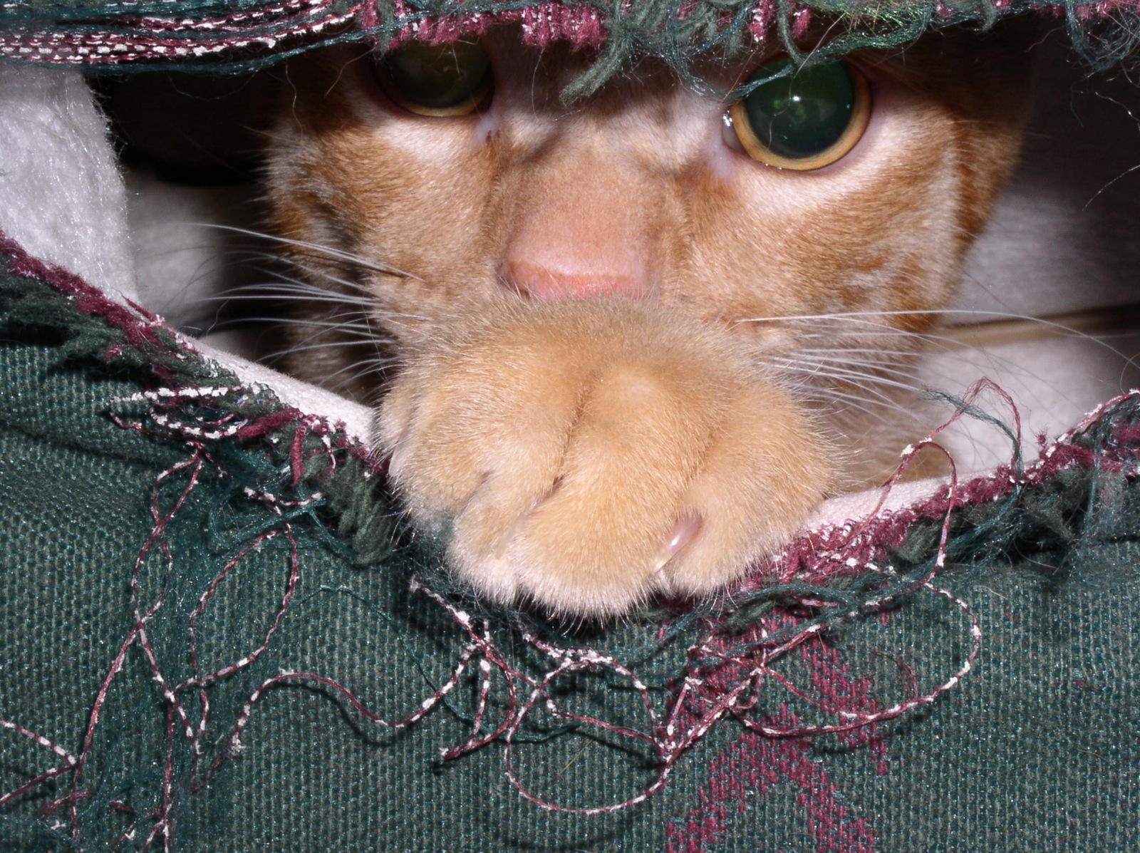 Cat Scratch Water Bowl