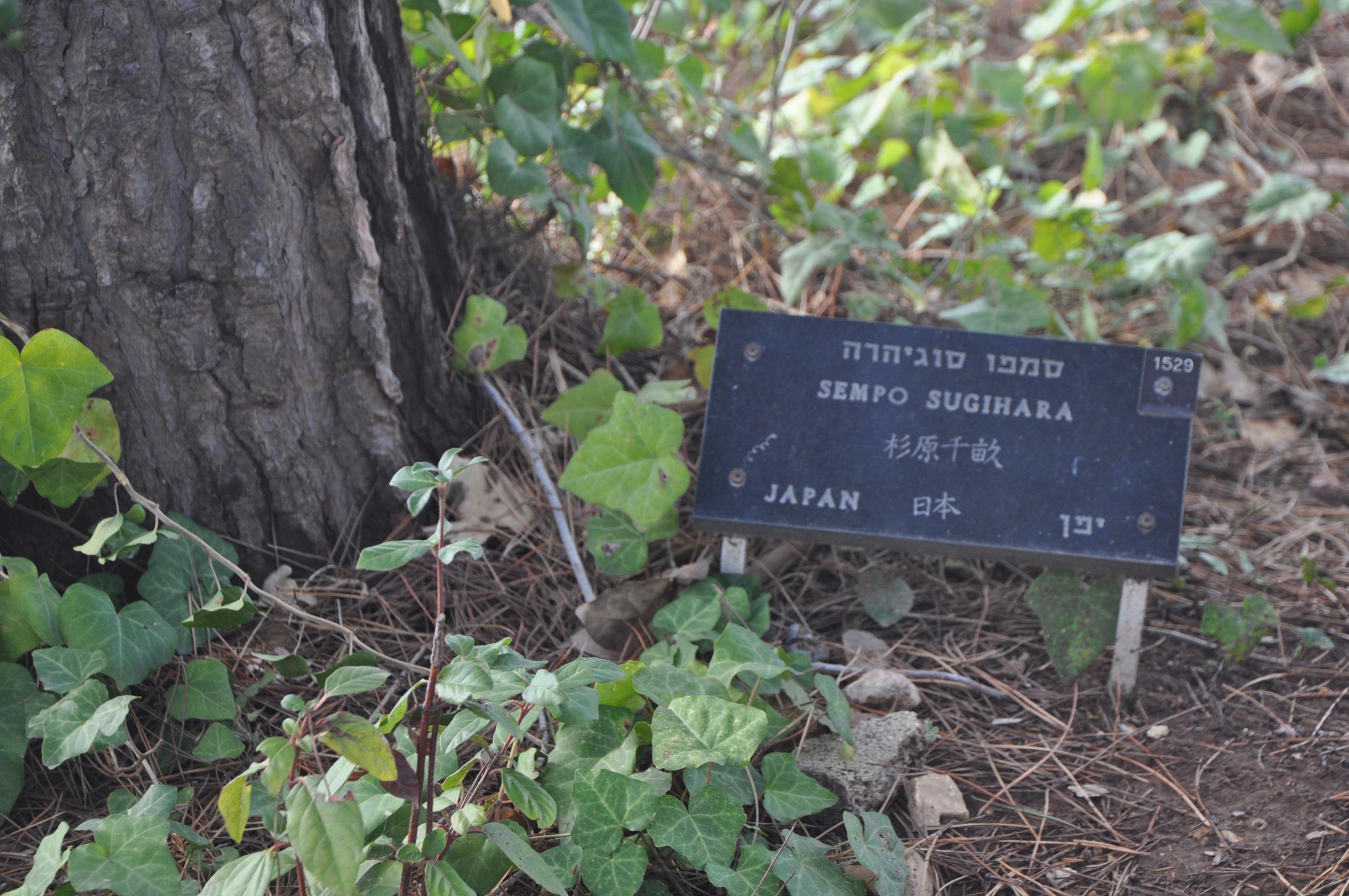 【イスラエル】「命のビザ」植林が消失=杉原千畝記念碑も所在不明 YouTube動画>1本 ->画像>15枚