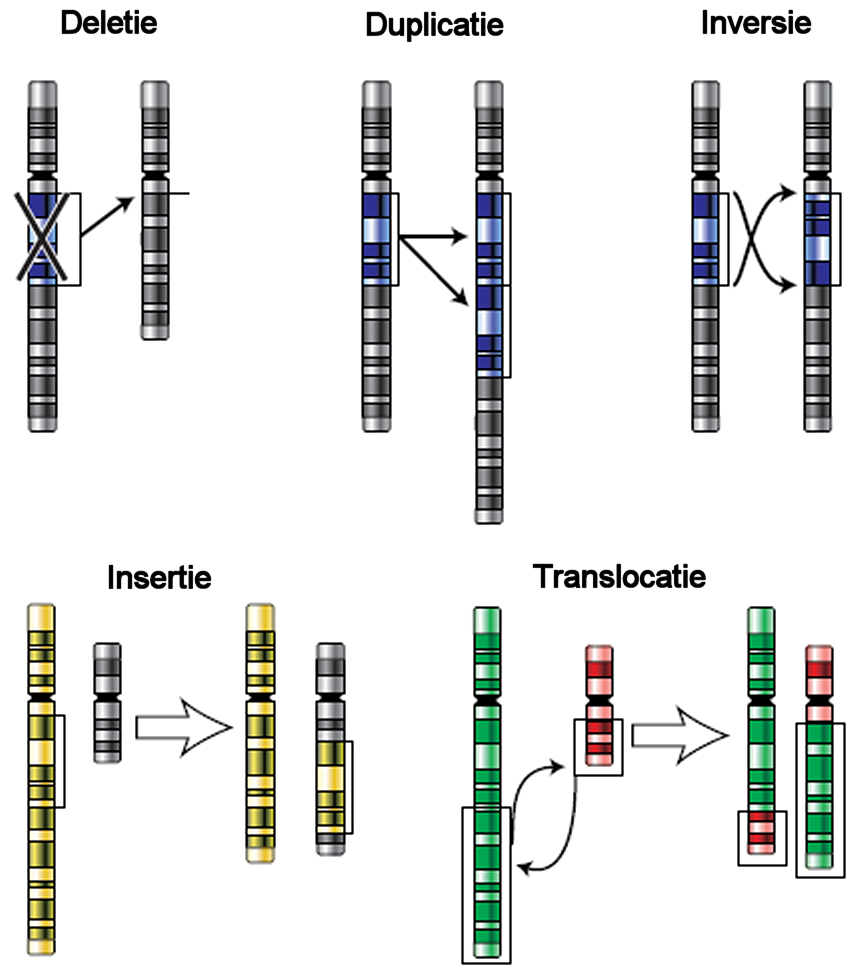 http://upload.wikimedia.org/wikipedia/commons/f/fb/Chromosomenmutationen_Dutch_text.png