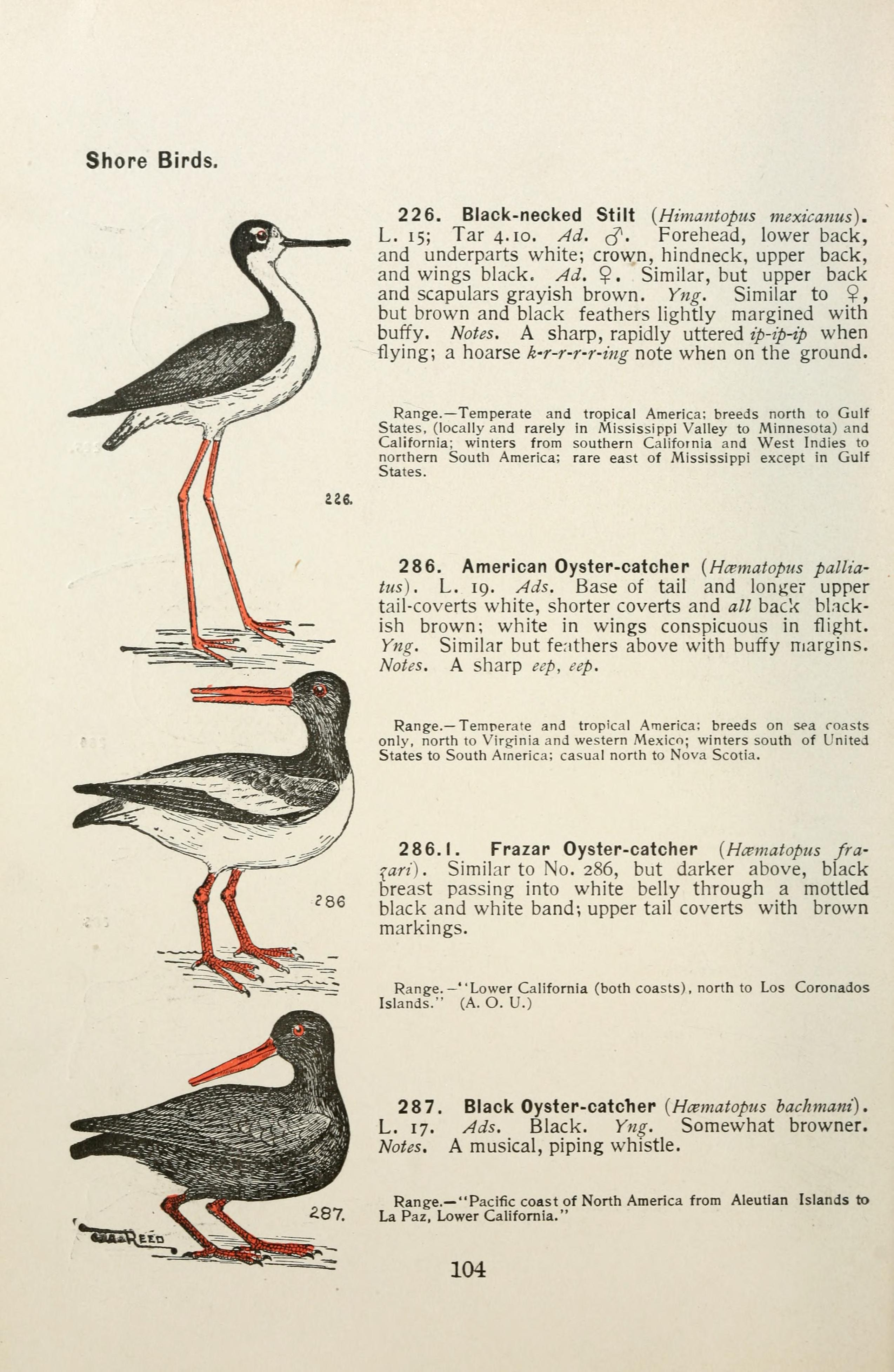 File:Color key to North American birds (Page 104) BHL7583508 jpg