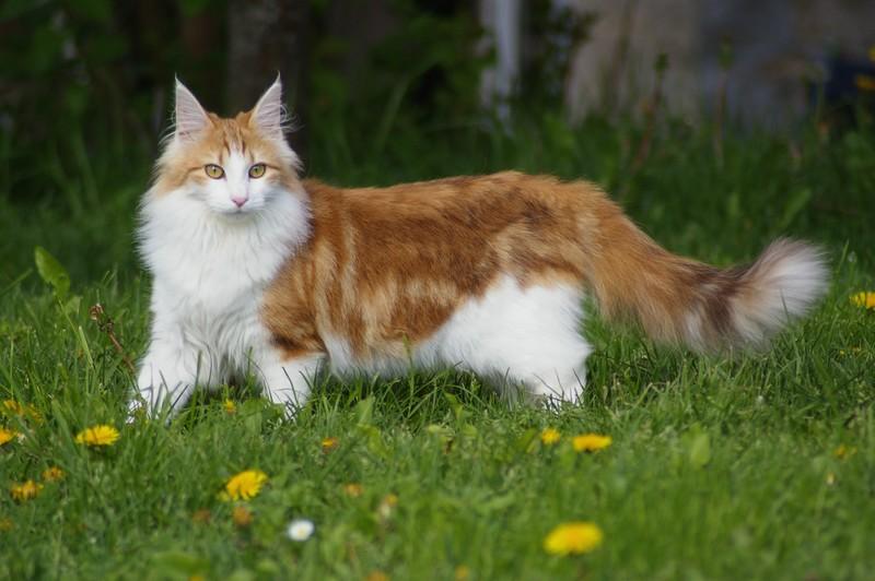 Norwegian Cat Outside Crime Against Humanity