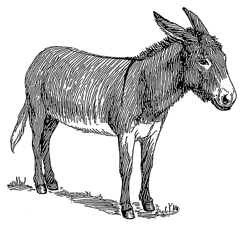 Line Drawing Donkey : File donkey psf wikimedia commons