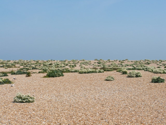 Dungeness - geograph.org.uk - 407836