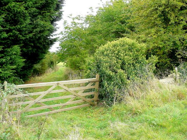 Footpath through a shelter belt - geograph.org.uk - 1515305