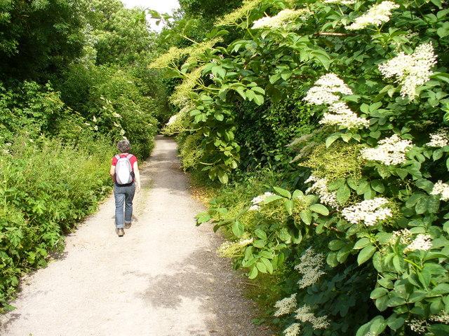 Hog's Back Trackway - geograph.org.uk - 856717