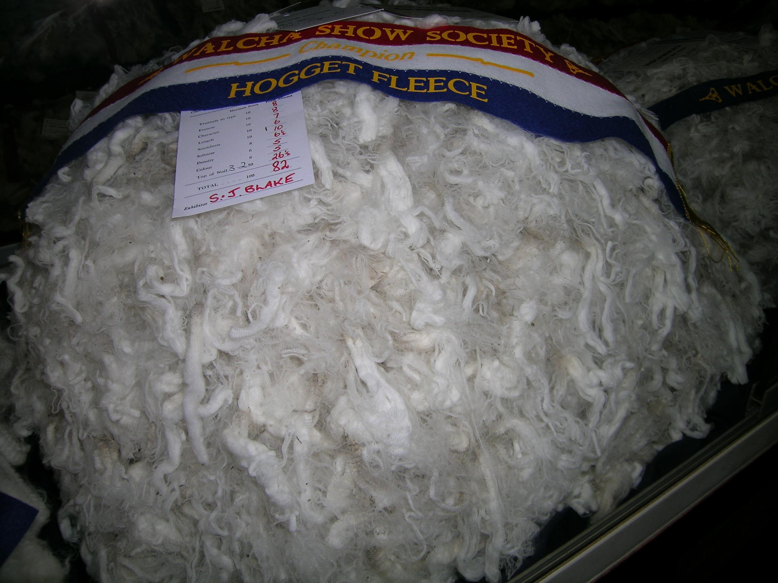 Champion hogget fleece, Walcha Show