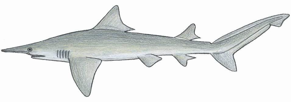 isogomphodon oxyrhynchus