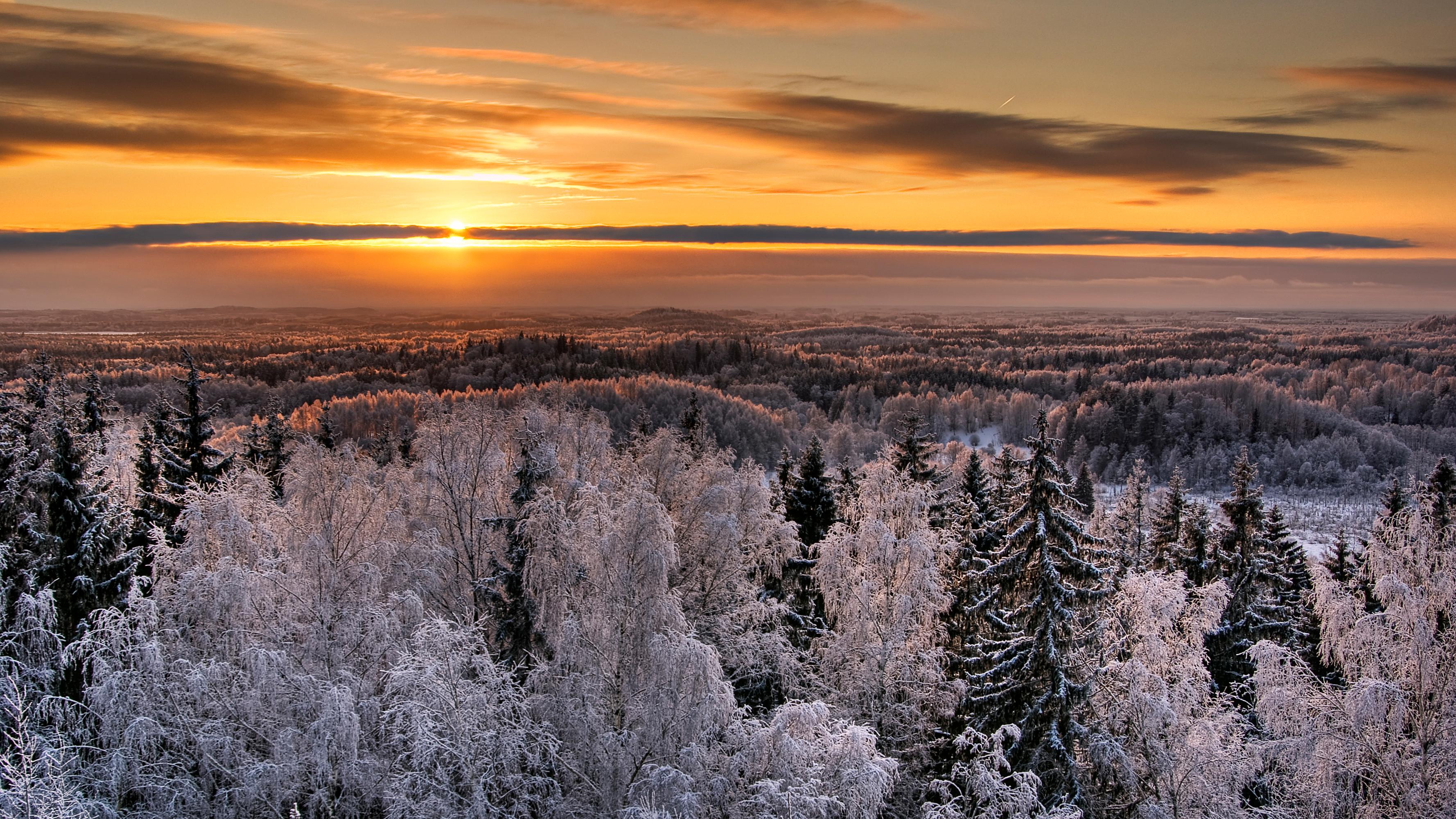 Der estnische fotograf janno loide im estnischen for Trauerfliegen wikipedia