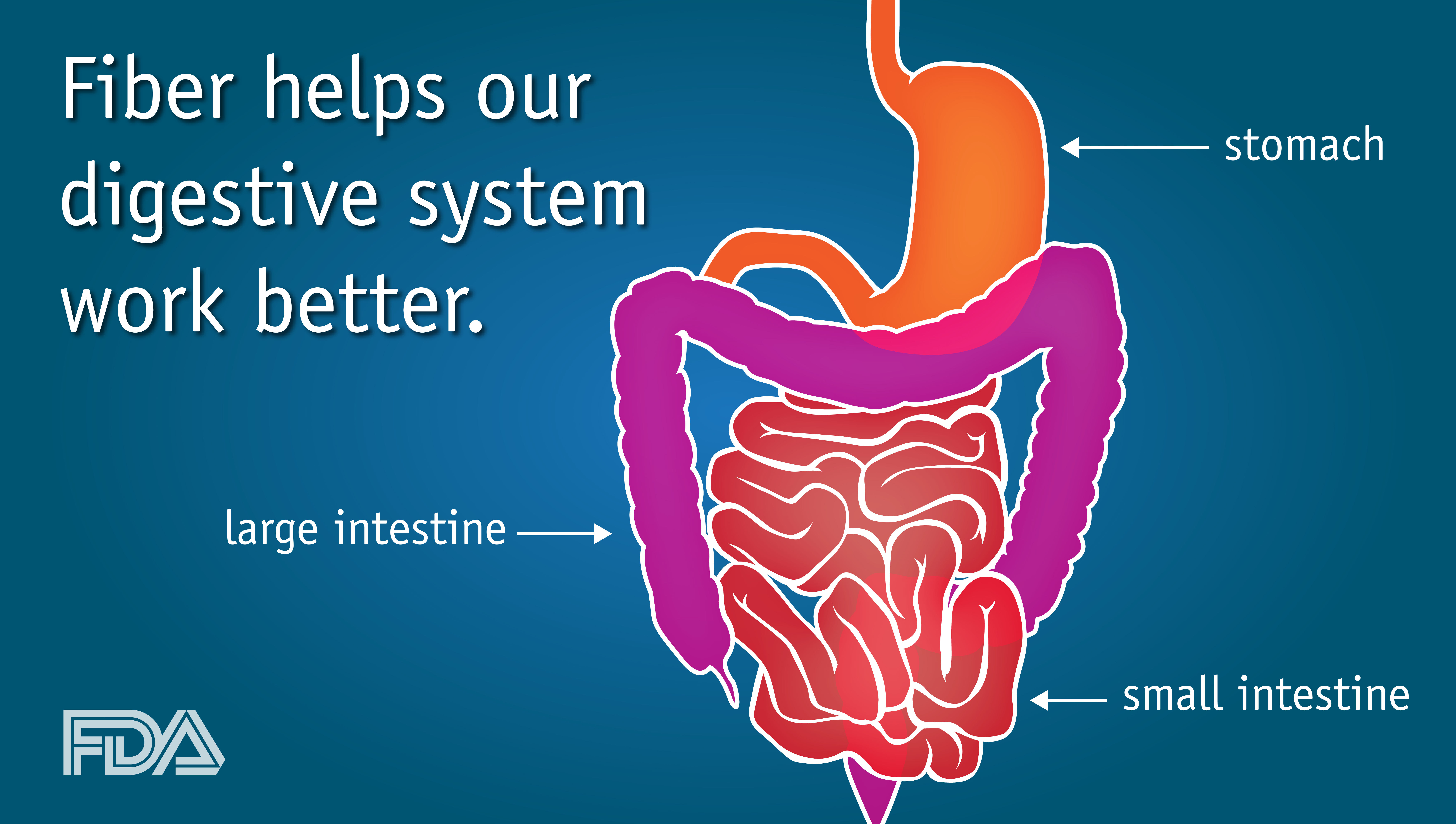 how our digestive system works - People.davidjoel.co