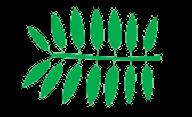 feuille pénée forme foliaire