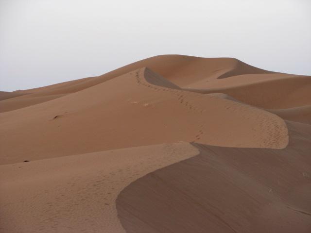 M'hamid morocco desert