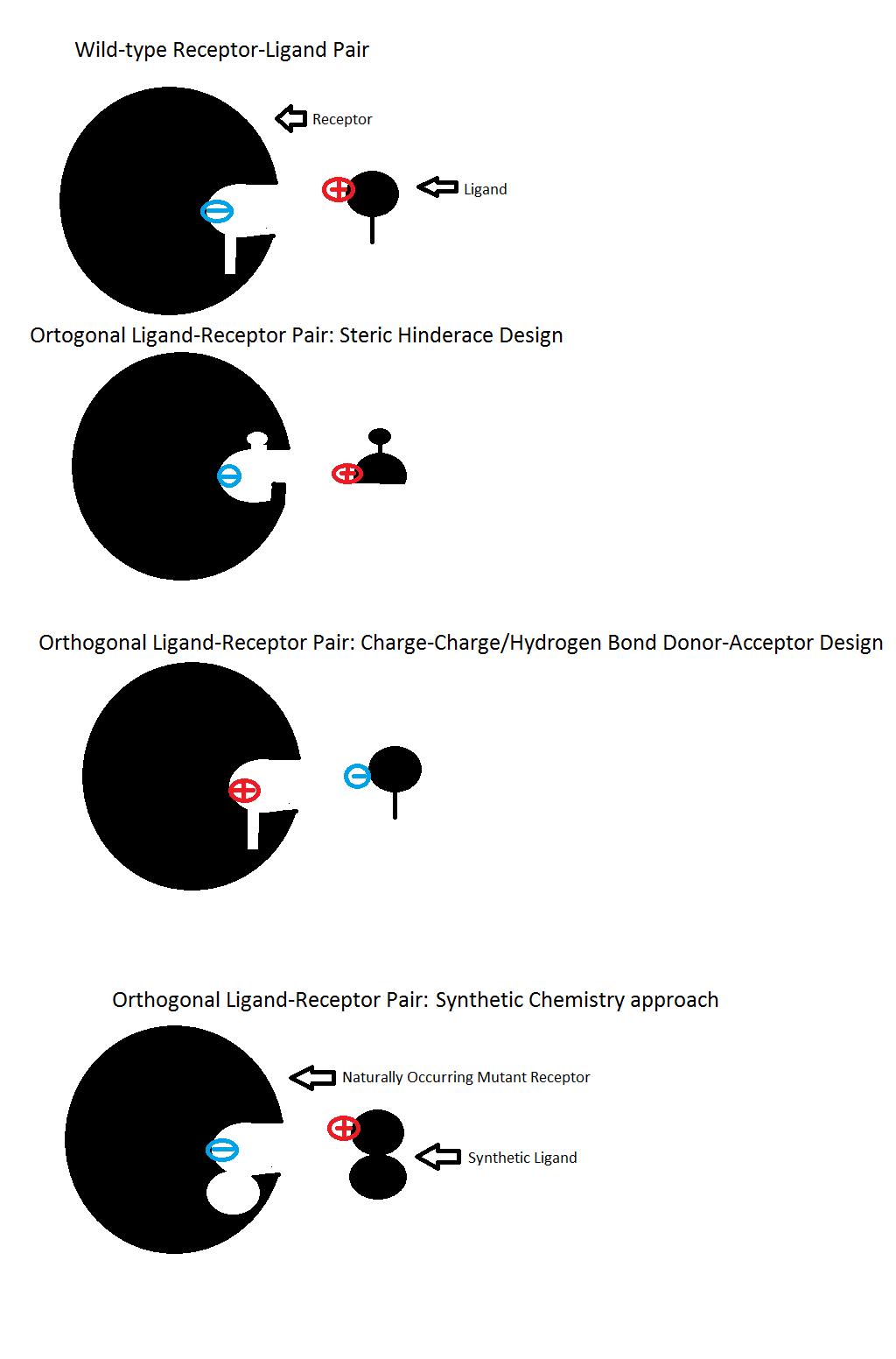 Orthogonal ligandprotein pair  Wikipedia