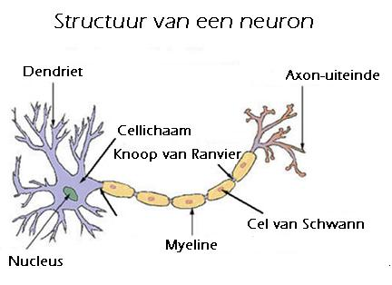 Axon Neuron / Vagwa - · Lohe 14.02.2004 ·