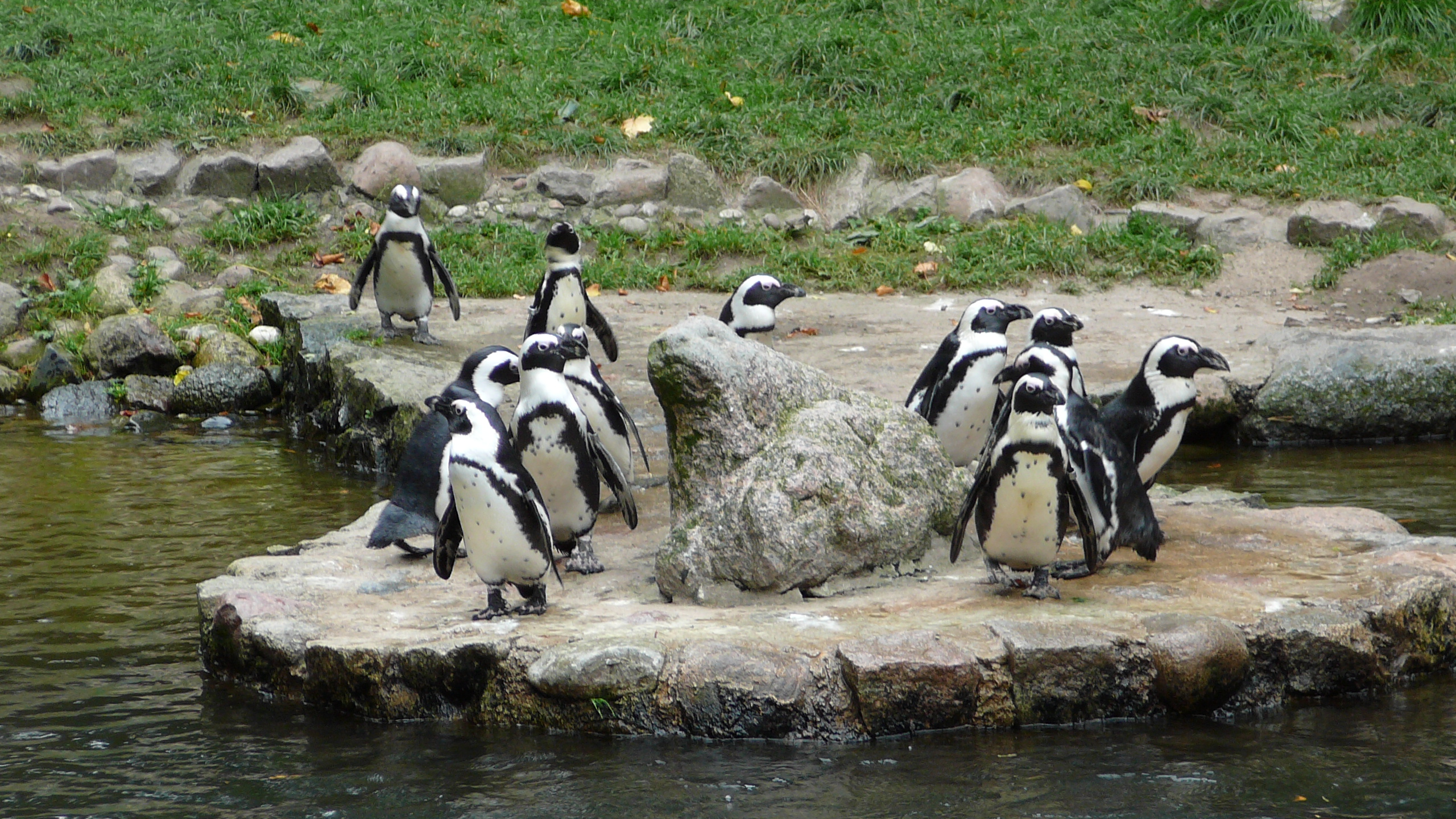 [Obrazek: Oliwa_zoo_pingwiny.JPG]