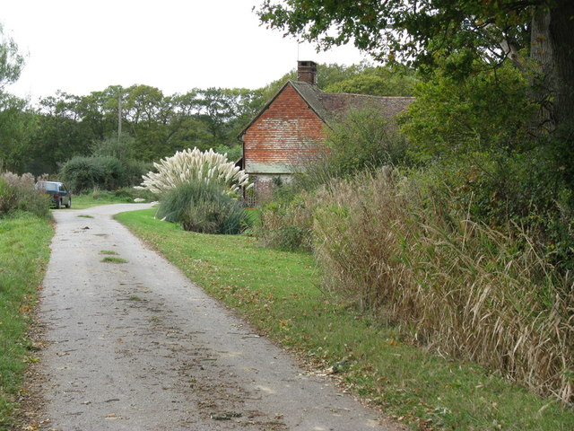 File:Ornamental grasses at Blackbrook Farm - geograph.org.uk - 1546097.jpg