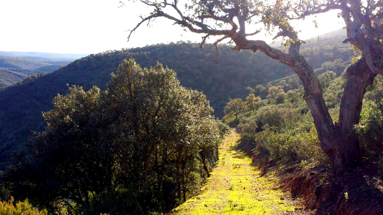 Paisaje del Parque Nacional de Cabañeros.jpg