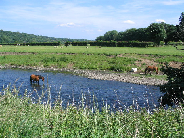 River Aire - geograph.org.uk - 20887