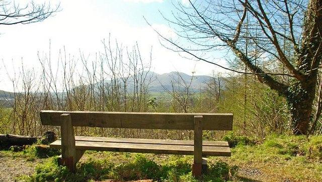Seat, Castlewellan Forest Park - geograph.org.uk - 1246470