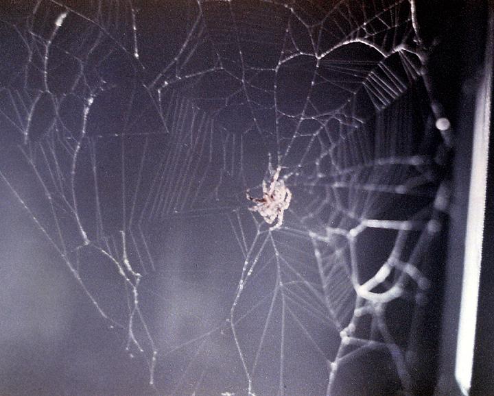 Hommage à Arabella et Anita Skylab_Spider_Arabella