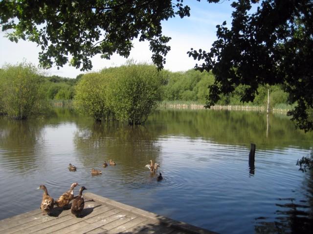 Stanley Marshes lake - geograph.org.uk - 928301