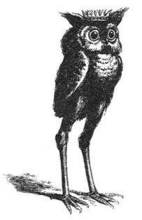 Stolas as illustrated by Louis Le Breton in Dictionnaire Infernal.