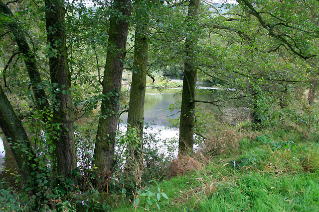 The River Derwent - geograph.org.uk - 1511930