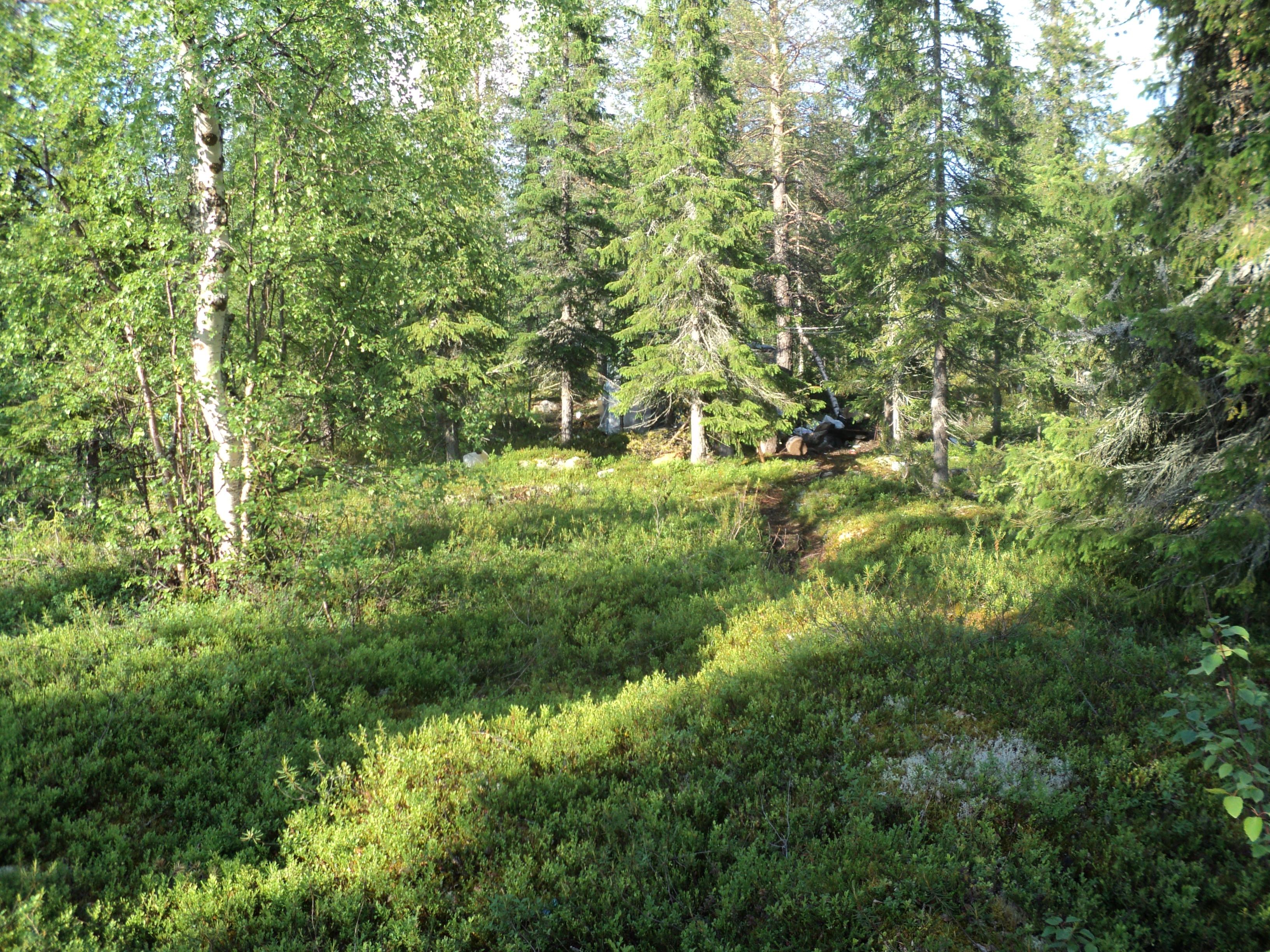 Описание лес близ озера юмас jpg