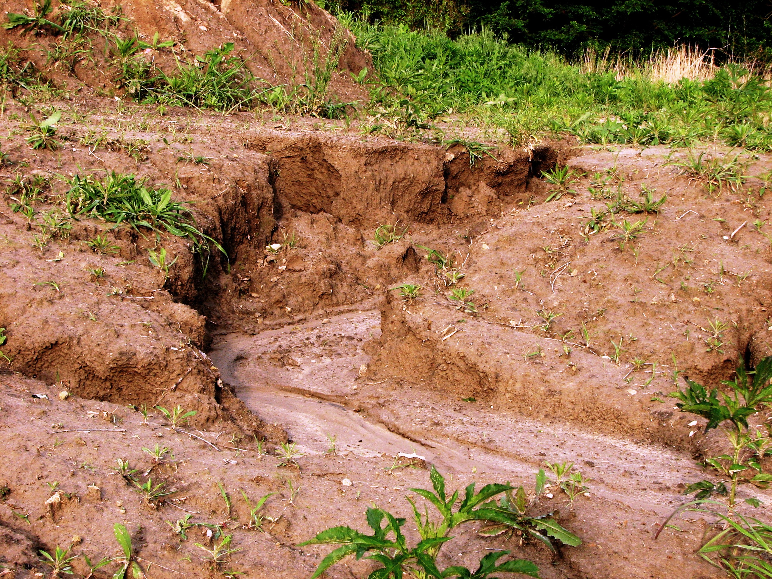 File a gully formed by water wikimedia commons for Soil erosion