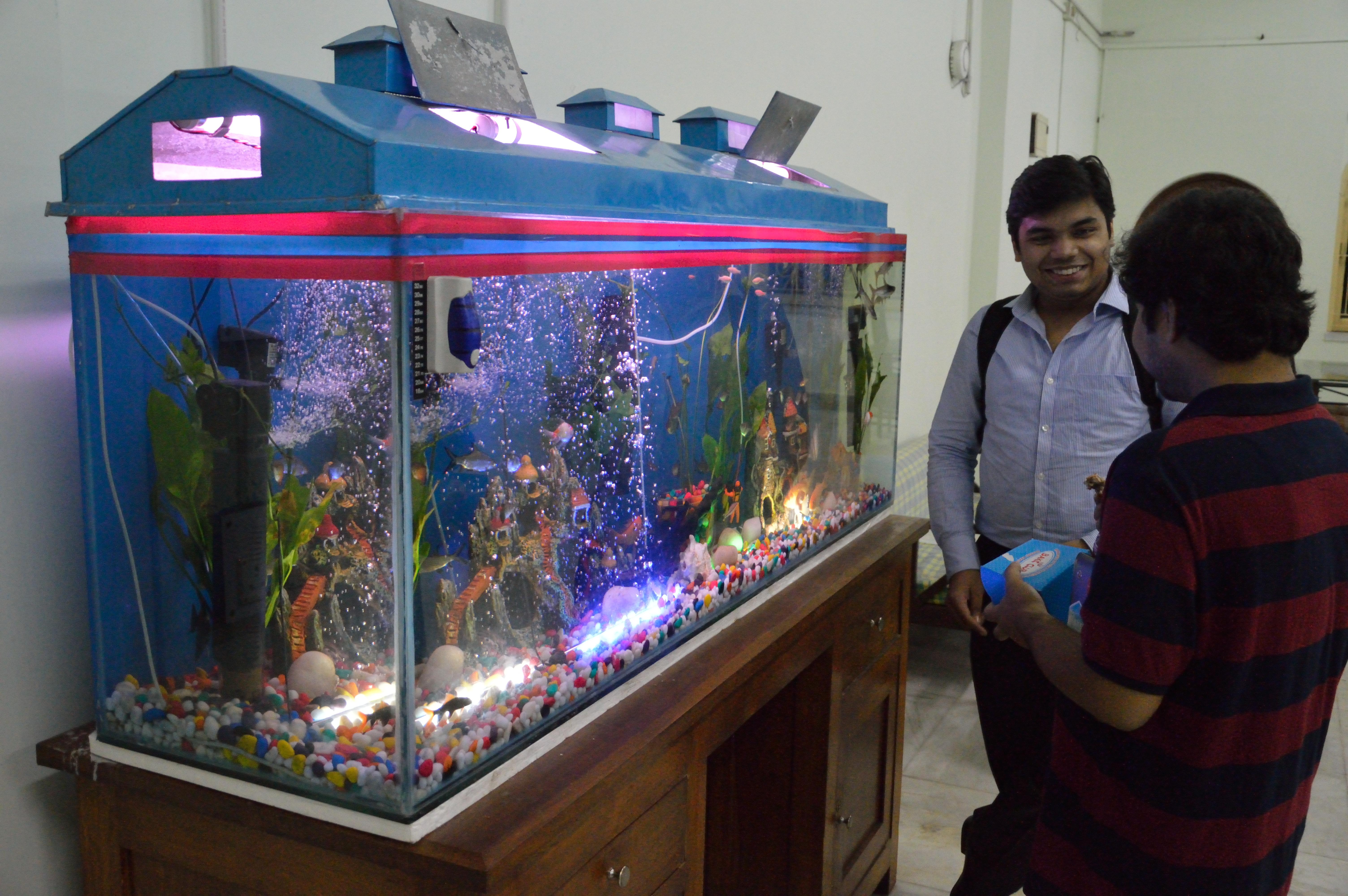 Fish for aquarium in kolkata - File Aquarium Restaurant University Guest House Jadavpur University Kolkata 2014