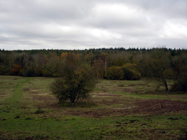 Ashmore Hill Copse, West Wood - geograph.org.uk - 77980