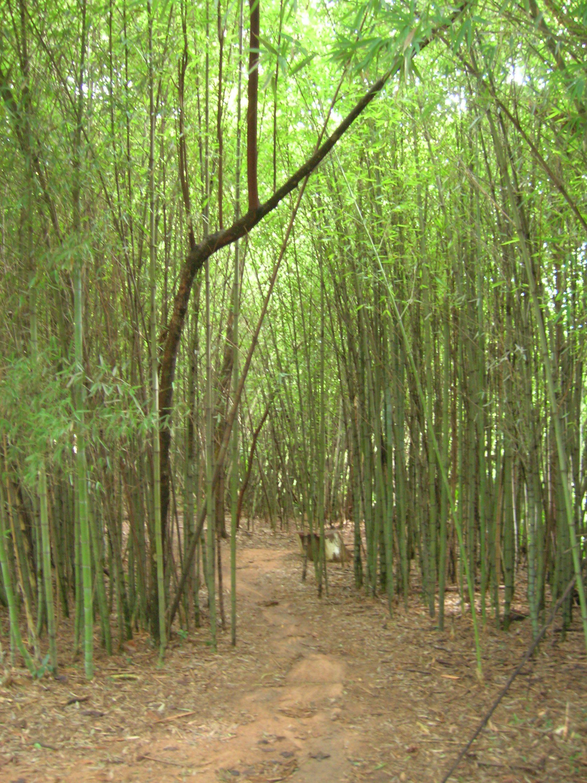 fotos jardim botanico porto alegre : fotos jardim botanico porto alegre:File:Bambus jardim botânico porto alegre.JPG – Wikimedia Commons