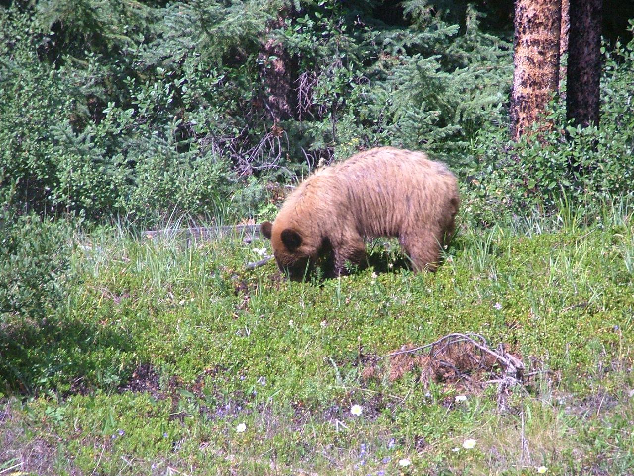Banff National Park Natural Resources
