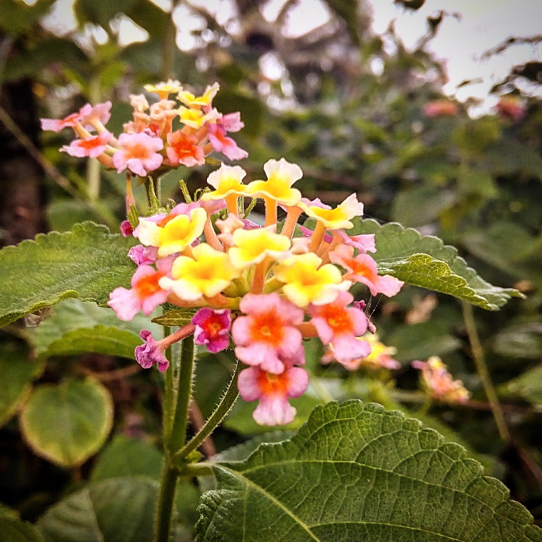 Filebeautiful Wild Flowersg Wikimedia Commons
