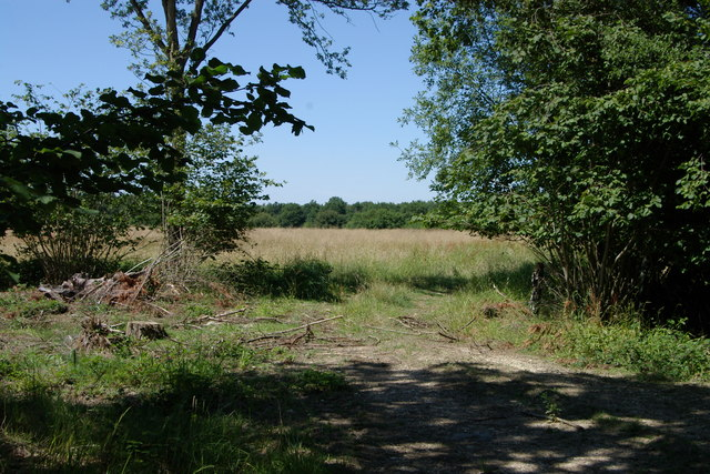 Bernwood Forest - geograph.org.uk - 204181