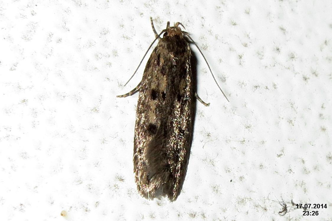 File Brown House Moth Garage 15574312795 Jpg